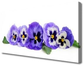 Vászonfotó Virágszirmok Pansies 125x50 cm