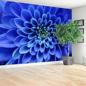Fotótapéta kék virág 104x70