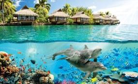 Fotótapéta - Delfinek Hawaii-on (254x184 cm)