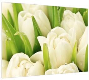 Tulipán virág képe (70x50 cm)