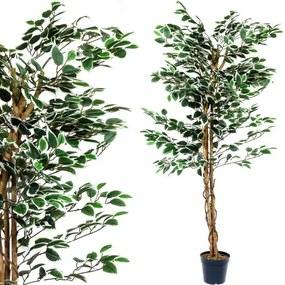 Műnövény PLANTASIA® Fikusz 160 cm