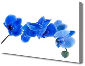 Vászonkép Természet virág növény 100x50 cm