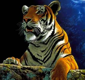 GFT Alapvető gyémántfestmény - tigris