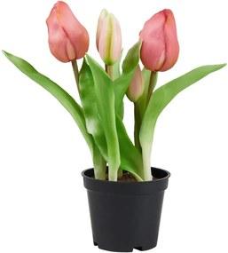 FLORISTA tulipán cserépben, rózsaszín 24 cm