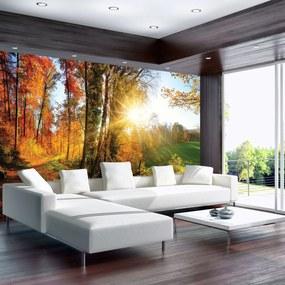 Fotótapéta - Őszi erdő (254x184 cm)