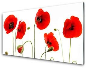 Fali üvegkép Az üzem pipacsok Nature 140x70 cm