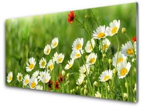 Fali üvegkép Daisy növény természet 140x70 cm