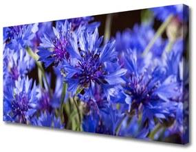 Vászonkép Virág növény természet 100x50 cm
