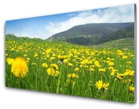 Fali üvegkép pitypang Természet 100x50 cm