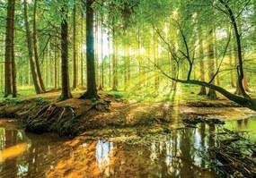 Fotótapéta - Napos erdő (254x184 cm)